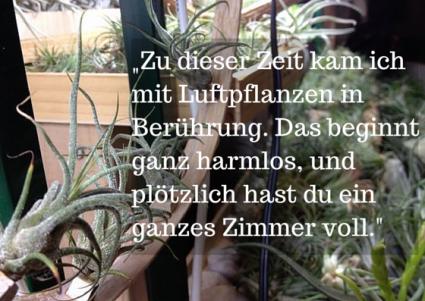 Luftpflanzen - erst eine, dann ein Zimmer voll