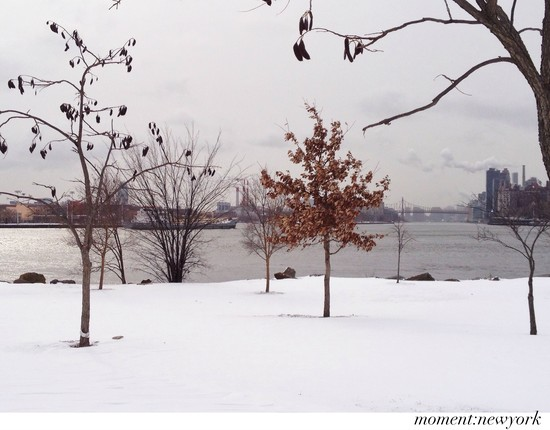 Schnee Randall Island