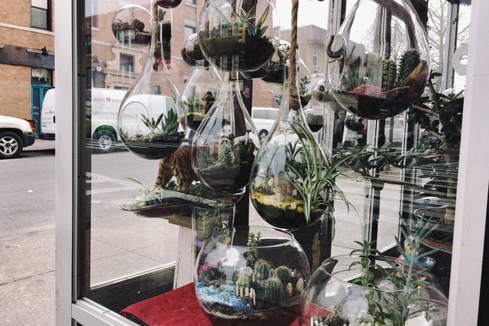 Terrarien in Astoria