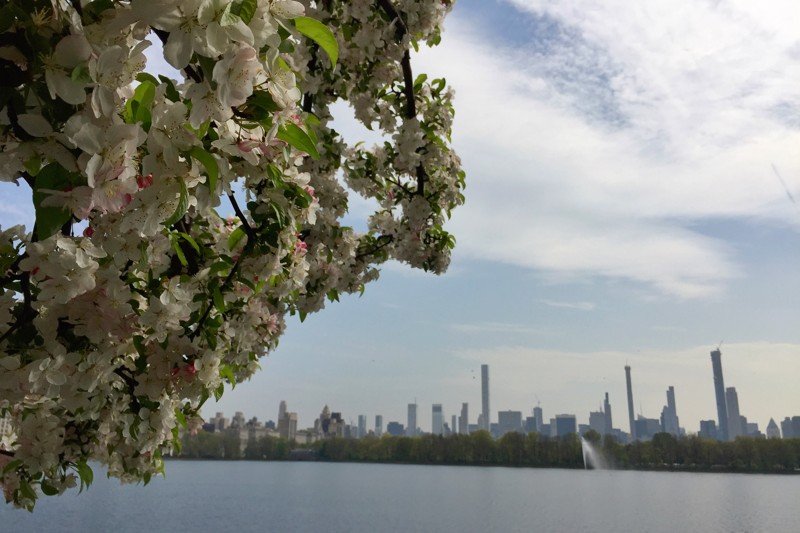 Cherry Blossom 2019 Kirschblüte New York