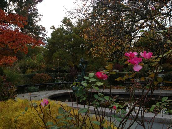 Letzte Rose im Central Park, New York