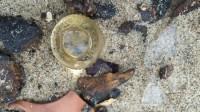 Dead Horse Bay Glas