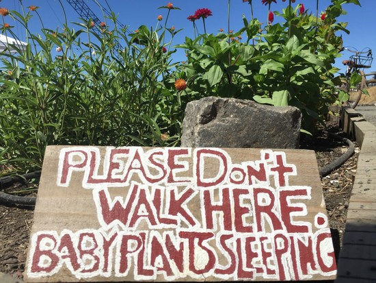 Wo Baby-Pflanzen schlafen