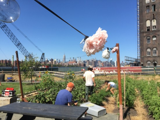 Urban Farm trifft Manhattan