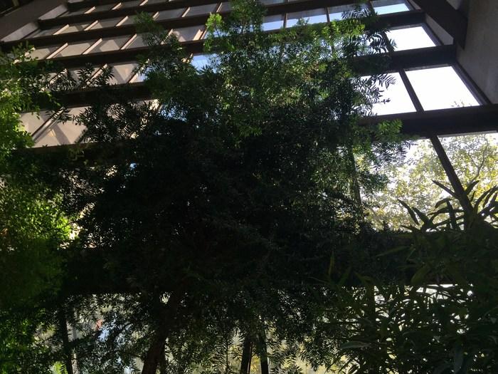 Baum im Atrium der Ford Foundation