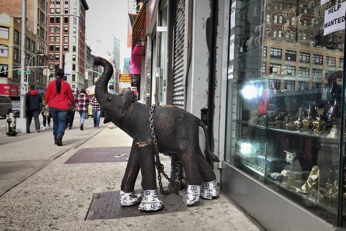 Große Tiere in New York: Elefant