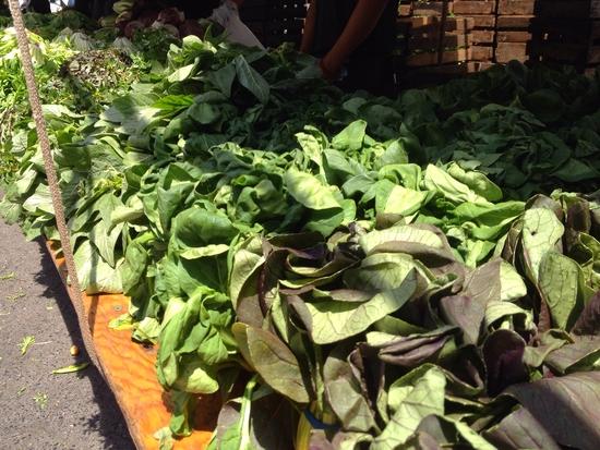 Wochenmarkt grünes Blattgemüse New York
