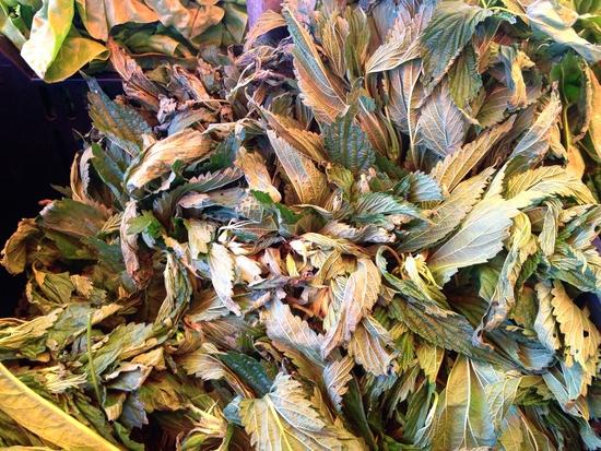 Brennessel Gemüse Markt New York