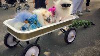 Halloween Dog Parade New York