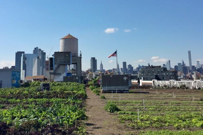 Brooklyn Grange Herbstgemüse