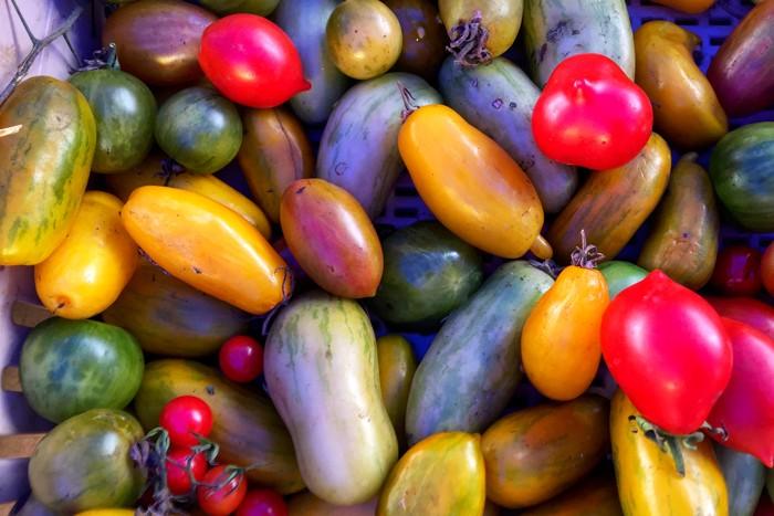 Herbstgemüse Tomaten New York