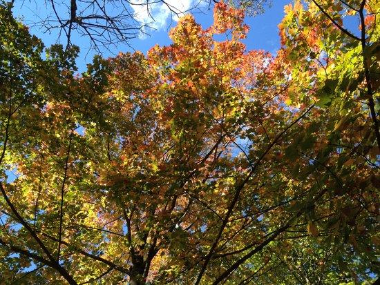 Herbstlaub Prospect Park