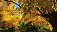 Herbstlaub New York 2016