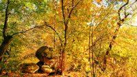 Herbstlaub 2017 Fall Foliage New York