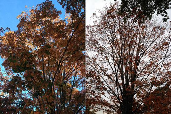 Das Herbstlaub lichtet sich in New York