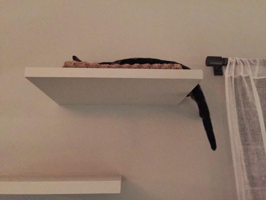 Katze auf dem Regal