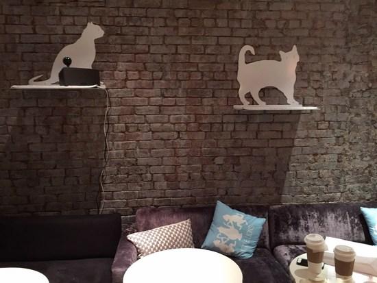 Little Lion ist ein Katzen-Cafe