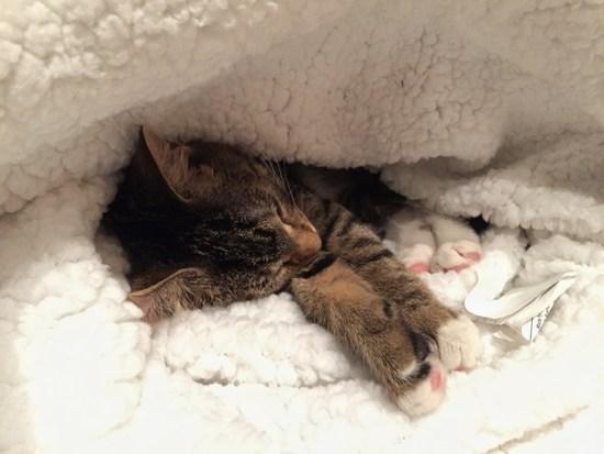 Babykatze im Katzen-Cafe