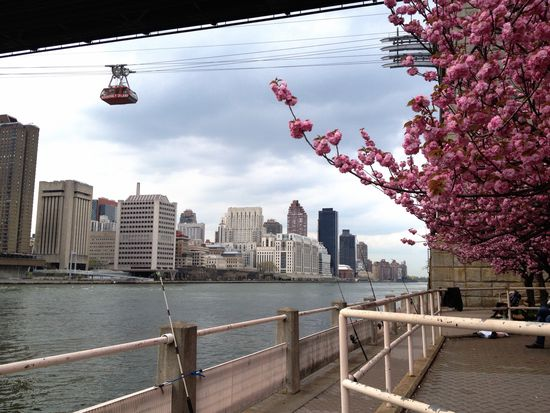 Mit der Seilbahn zur Kirschblüte
