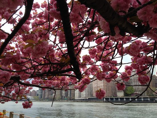 Blütenverhangener Himmel über New York
