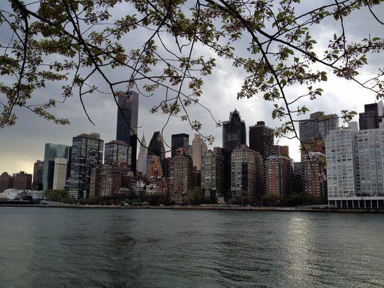 Verblühte Kirschen vor der Skyline von Manhattan