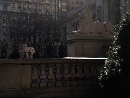 Zwei Löwen in der Sonne in New York