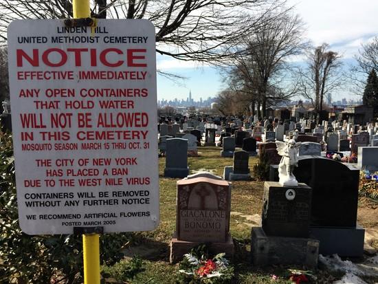 Mücken in New York: West Nile Virus-Gefahr