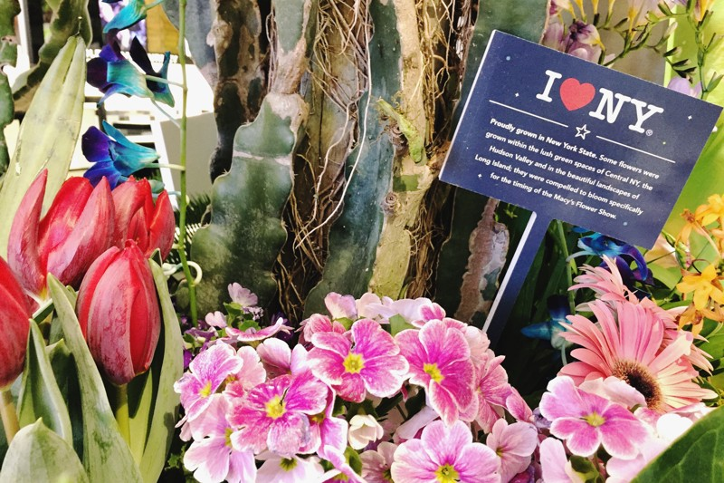 Macy's Flower Show 2019 New York Blumen