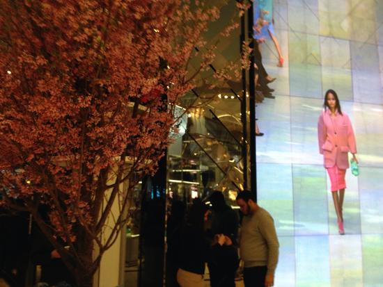 Kirschblüten und ein digitaler Display mit Laufsteg-Video