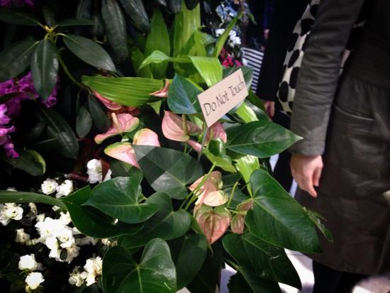 Topfpflanzen bei Macy's als Frühlingsgruß