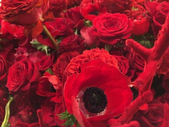 Rote Blumen bei Macy's Flower Show