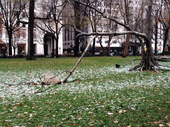 Baum im Madison Square Park