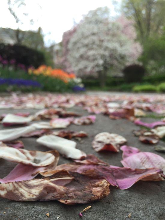 Magnolienblätter im Central Park