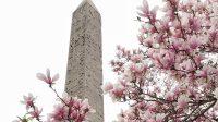 Magnolien Obelisk 2019