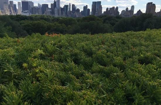 New York Jungle - vom Dach des Met Museum