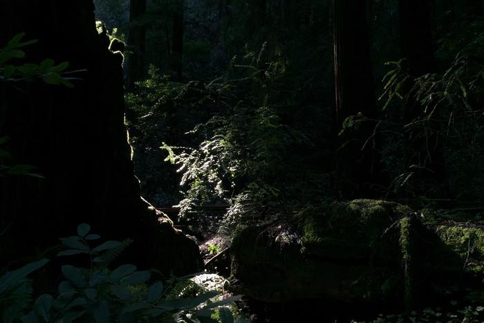Muir Woods Kalifornien Fopanet 1-2017