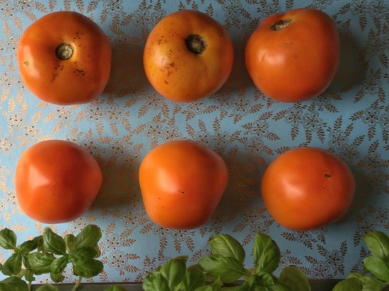 Tomaten in gelb-orange