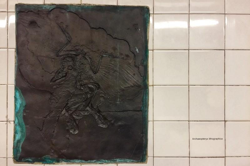 U-Bahn-Kunst 81st Street Natural History Museum