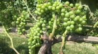 North Fork-Wein