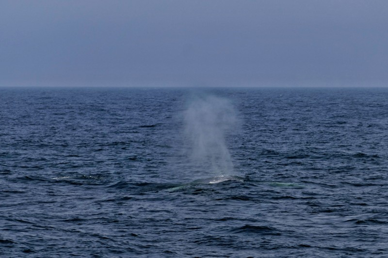CRESLI Whale Watching
