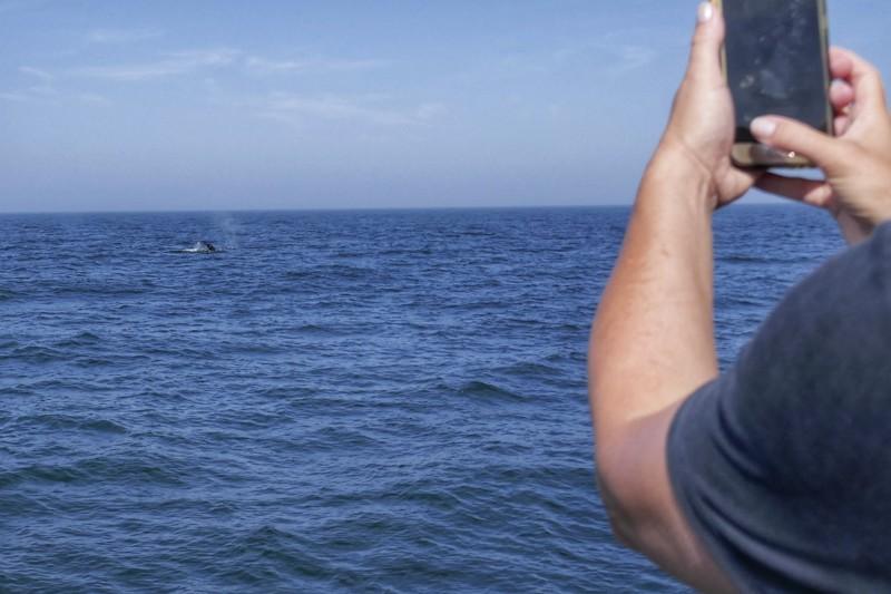 CRESLI Whale Watching Wale New York