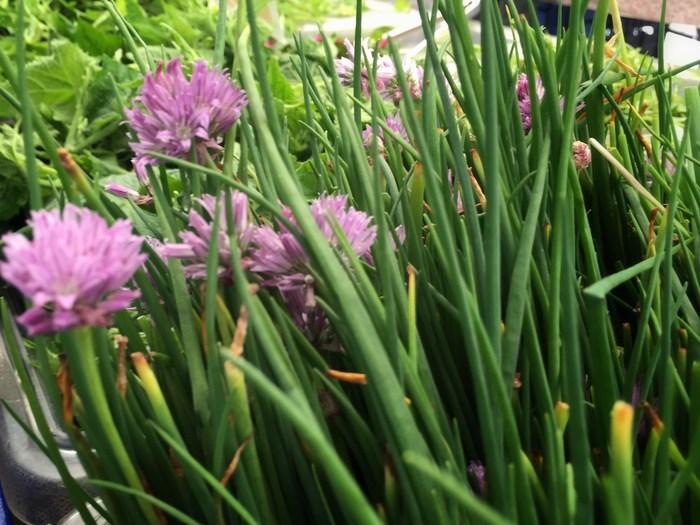 Essbare Blumen Trend auf dem Wochenmarkt in New York