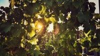 Urban Farming Wein New York